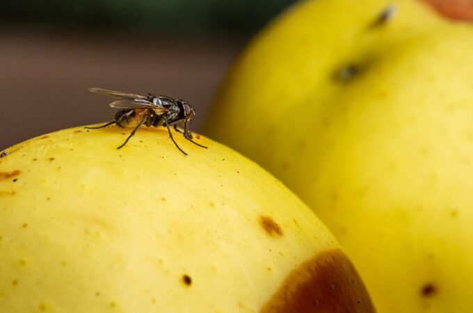 How To Get Rid Of Flies Inside